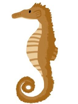 Ocean companion seahorse