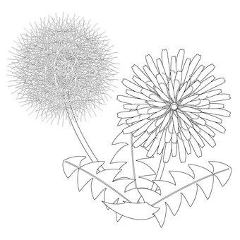 Dandelion material_no color