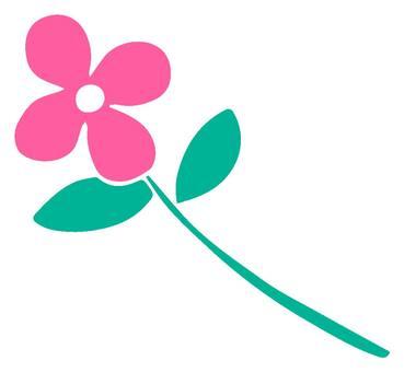 Cut flowers pink