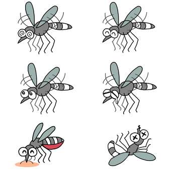Mosquito / Set