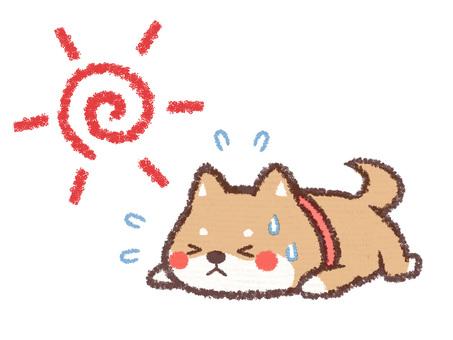 Ahochiru dog
