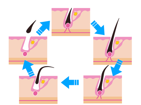Epilation Hair Cycle