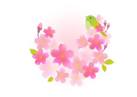 Sakura 397