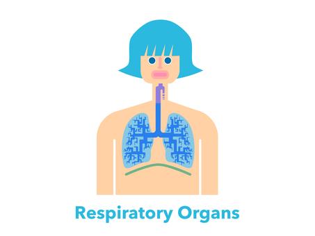 Simple illustration of human respiratory organs