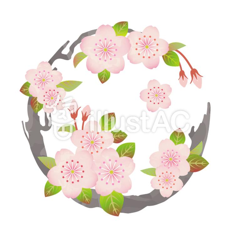 花丸紋様(桜)のイラスト