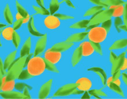 Citrus fruit wallpaper