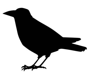 Crow (Normal)