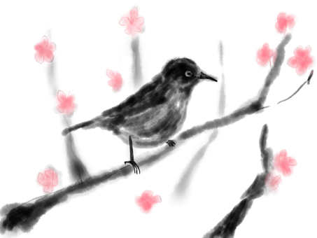 梅羅和櫻花