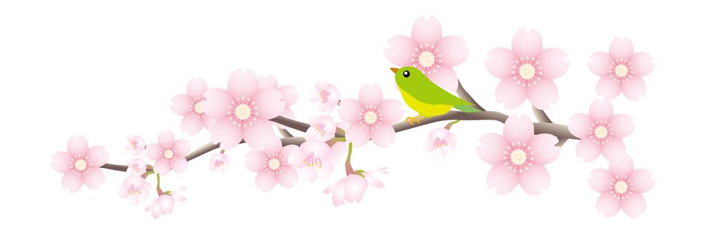 櫻桃樹枝和小鳥