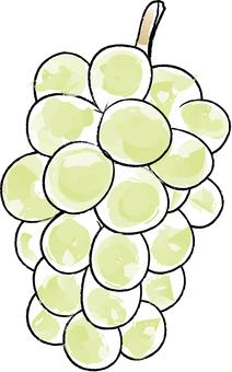 Rough fruits Muscat