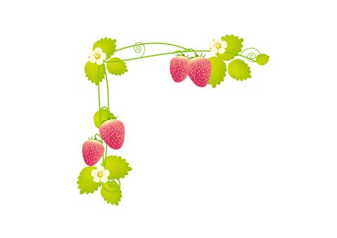 Strawberry frame on