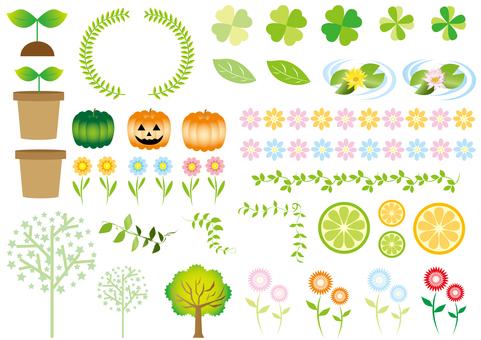 花和植物集