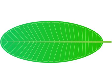 Plumeria leaf A (1 sheet)