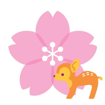櫻花和赤緯