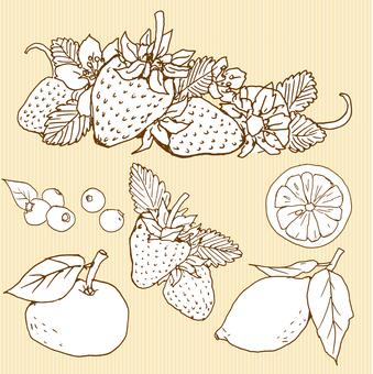 Fruit drawing