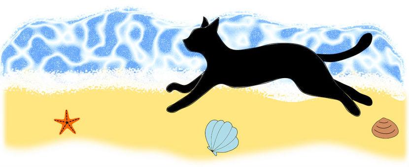 고양이 씨 비치에서 달리는