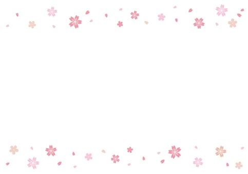 Sakura illustration background