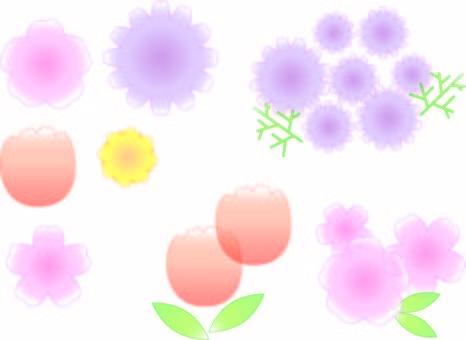 투명의 꽃