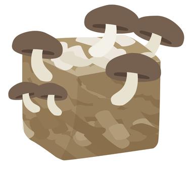 균상 재배 표고 버섯