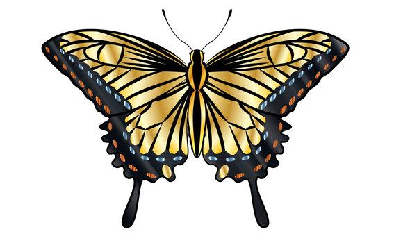 호랑 나비의 일러스트 02