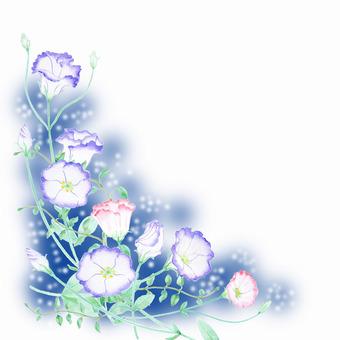 Turkey Chrysanthemum border ★ 0480-F
