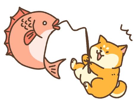 Fishing shiba