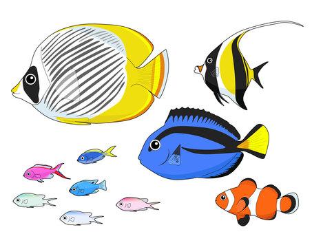 Marine fish caught in Okinawa