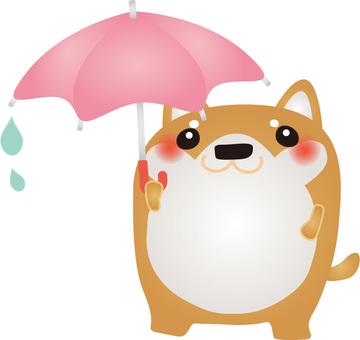 Shiba Umbrella