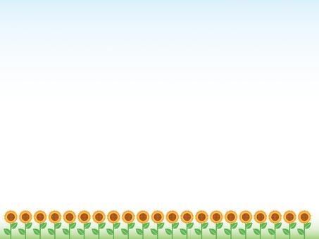 Sunflower background - sunflower ~