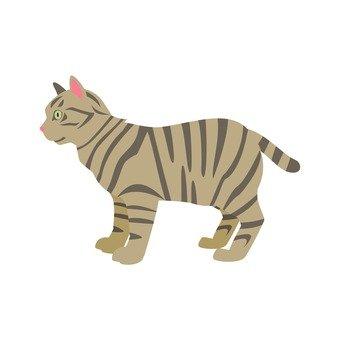 Cat - a pet cat