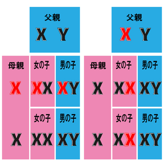 Genetic diagram of dominant gene