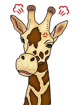 Giraffe getting angry