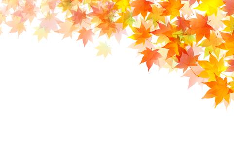 Fall image material 5