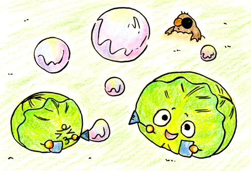 Cabbage and soap bubbles
