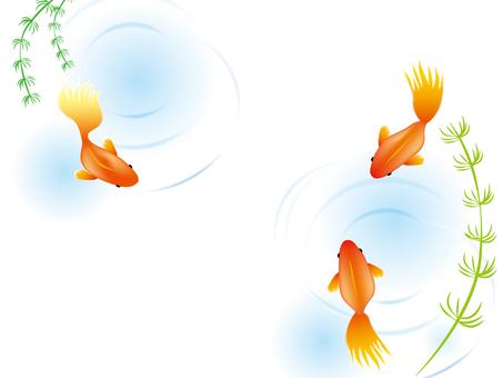 Goldfish 1
