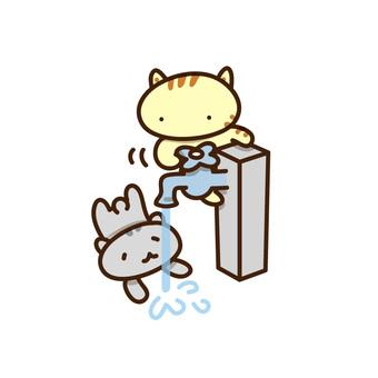 猫喝自来水的插图