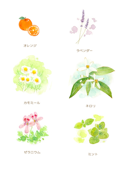 Herbal illustration ①