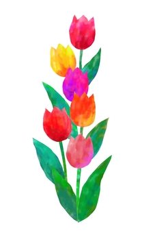 Tulips bloomed