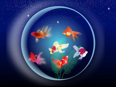 Aquarium 06