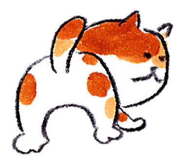 Search cat
