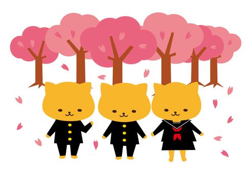 New semester (spring cherry blossoms)