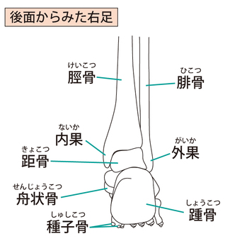Right foot viewed from the back