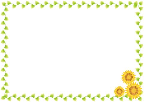 Sunflower 26