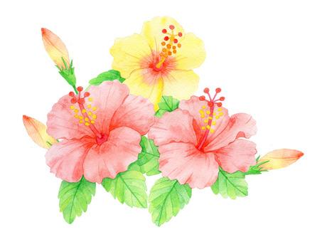 Hibiscus ★ 0124-F