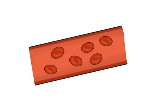 血管 赤血球