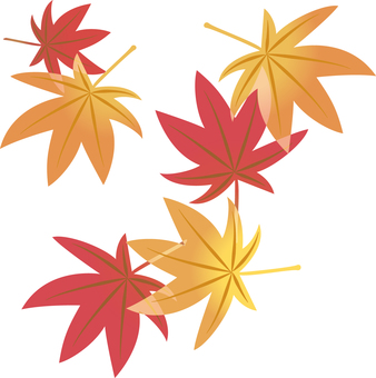 Maple maple maple