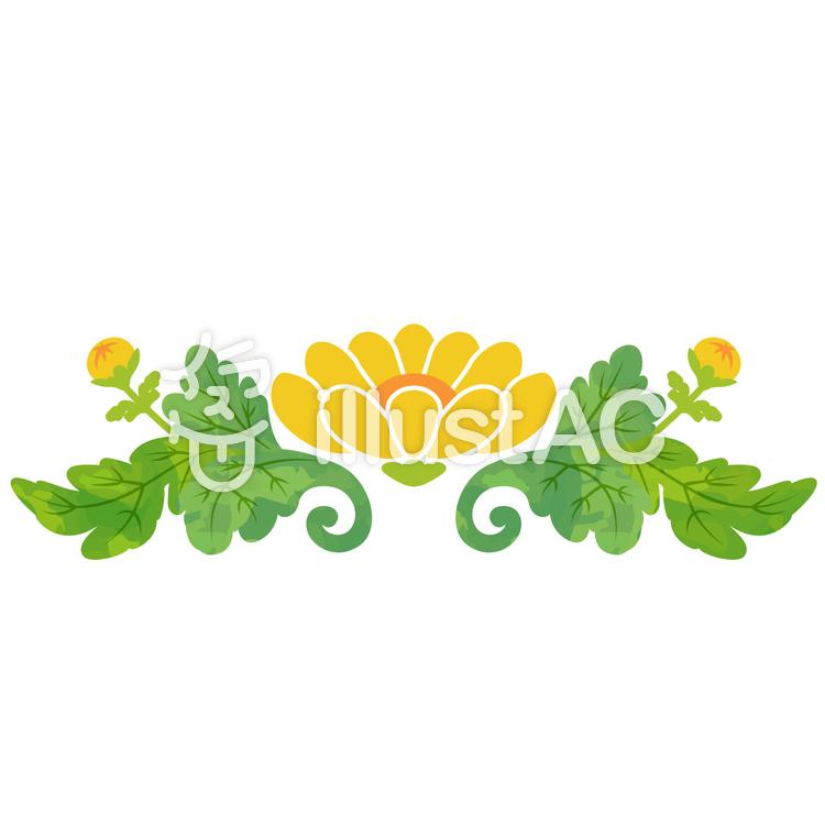 飾り菊のイラスト