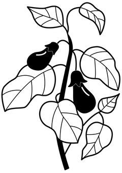 Eggplant 1c