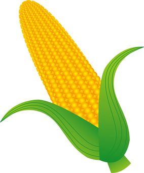 玉米/類型f / uta