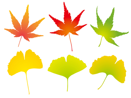 Autumn leaves and ginkgo silhouette (color)